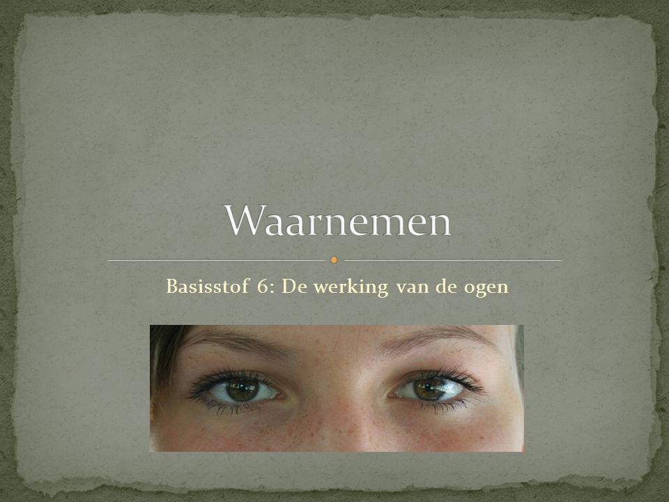 Basisstof 6: De werking van de ogen