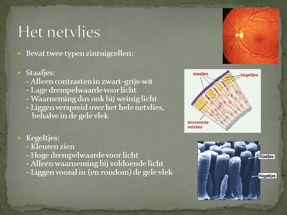 Het netvlies Bevat twee typen zintuigcellen: