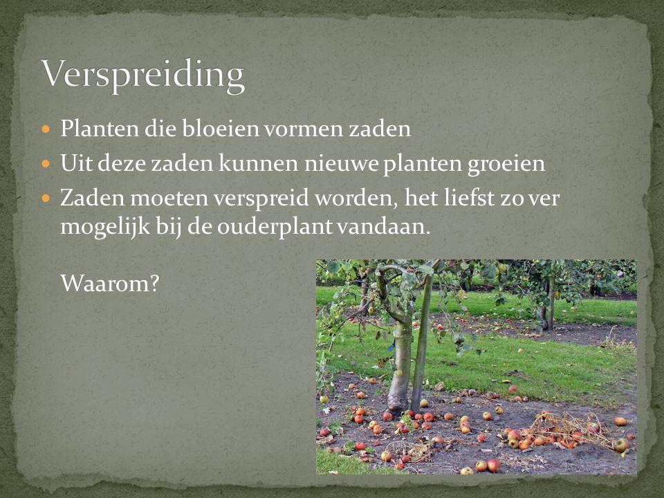 Verspreiding Planten die bloeien vormen zaden