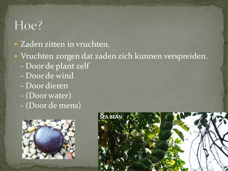 Hoe Zaden zitten in vruchten.