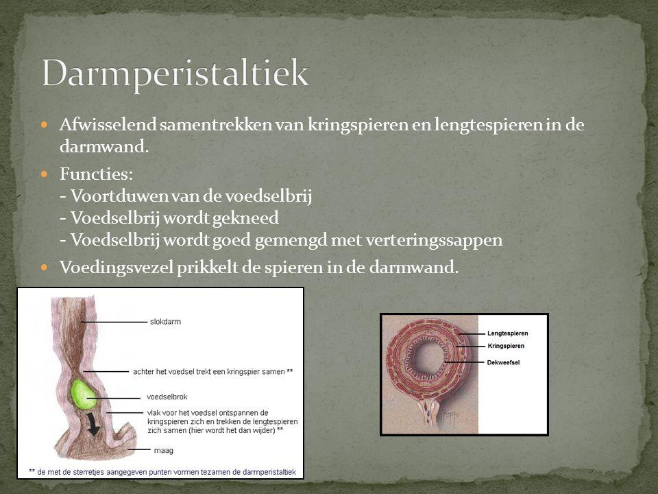 Darmperistaltiek Afwisselend samentrekken van kringspieren en lengtespieren in de darmwand.