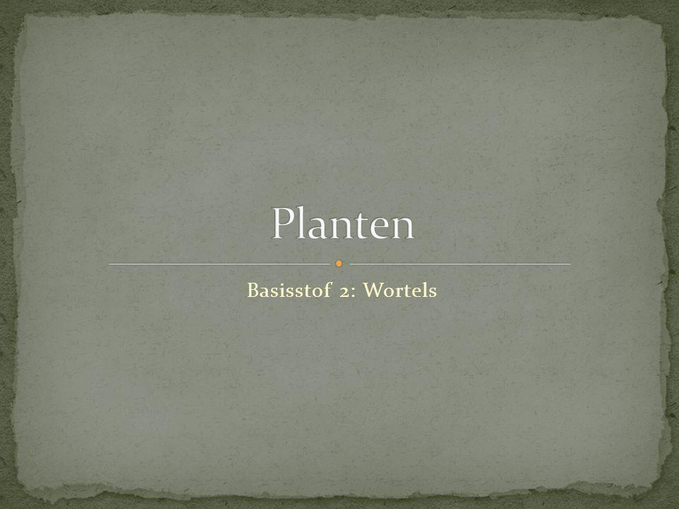 Planten Basisstof 2: Wortels