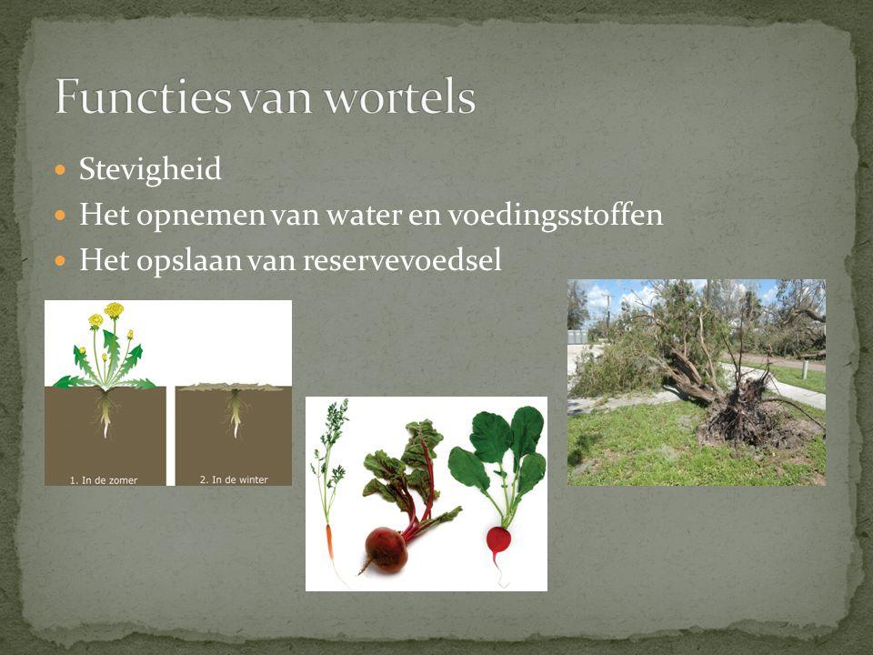 Functies van wortels Stevigheid