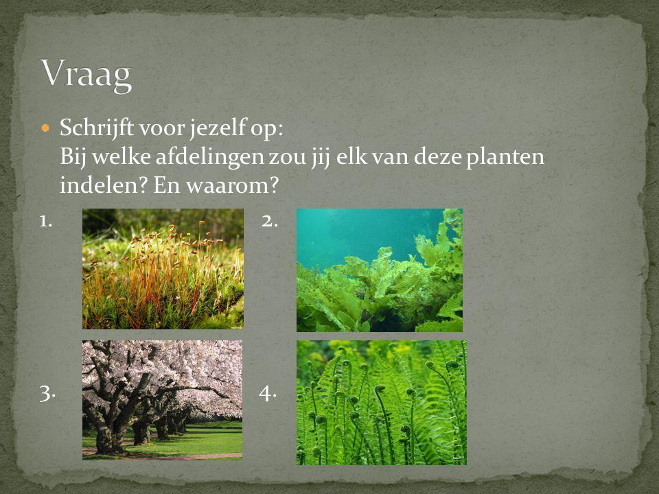 Vraag Schrijft voor jezelf op: Bij welke afdelingen zou jij elk van deze planten indelen En waarom