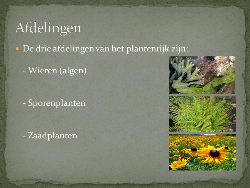 Afdelingen De drie afdelingen van het plantenrijk zijn: - Wieren (algen) - Sporenplanten - Zaadplanten.