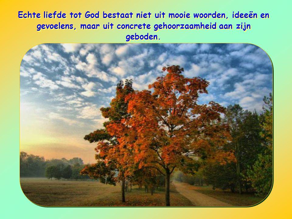 Echte liefde tot God bestaat niet uit mooie woorden, ideeën en gevoelens, maar uit concrete gehoorzaamheid aan zijn geboden.