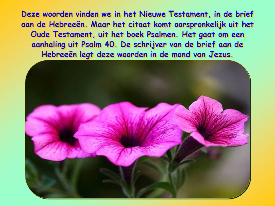 Deze woorden vinden we in het Nieuwe Testament, in de brief aan de Hebreeën.