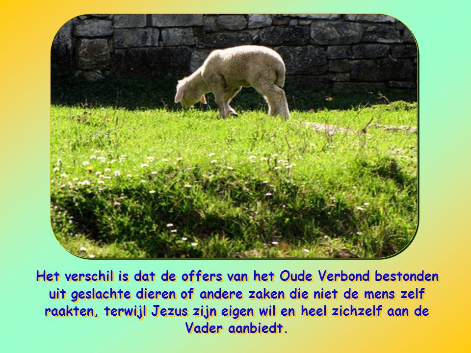 Het verschil is dat de offers van het Oude Verbond bestonden uit geslachte dieren of andere zaken die niet de mens zelf raakten, terwijl Jezus zijn eigen wil en heel zichzelf aan de Vader aanbiedt.
