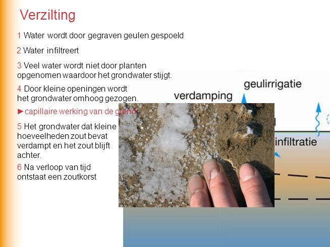 Verzilting 1 Water wordt door gegraven geulen gespoeld