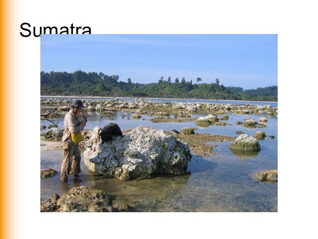 Sumatra www.vu.nl/aardwetenschappen