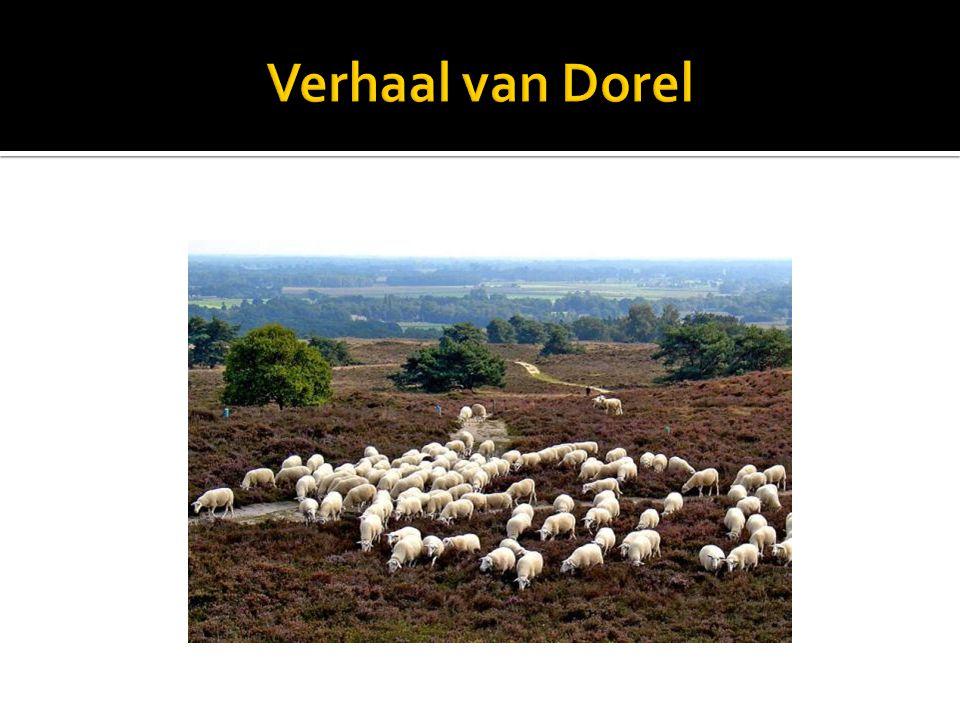 Verhaal van Dorel