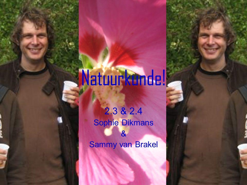 2.3 & 2.4 Sophie Dikmans & Sammy van Brakel