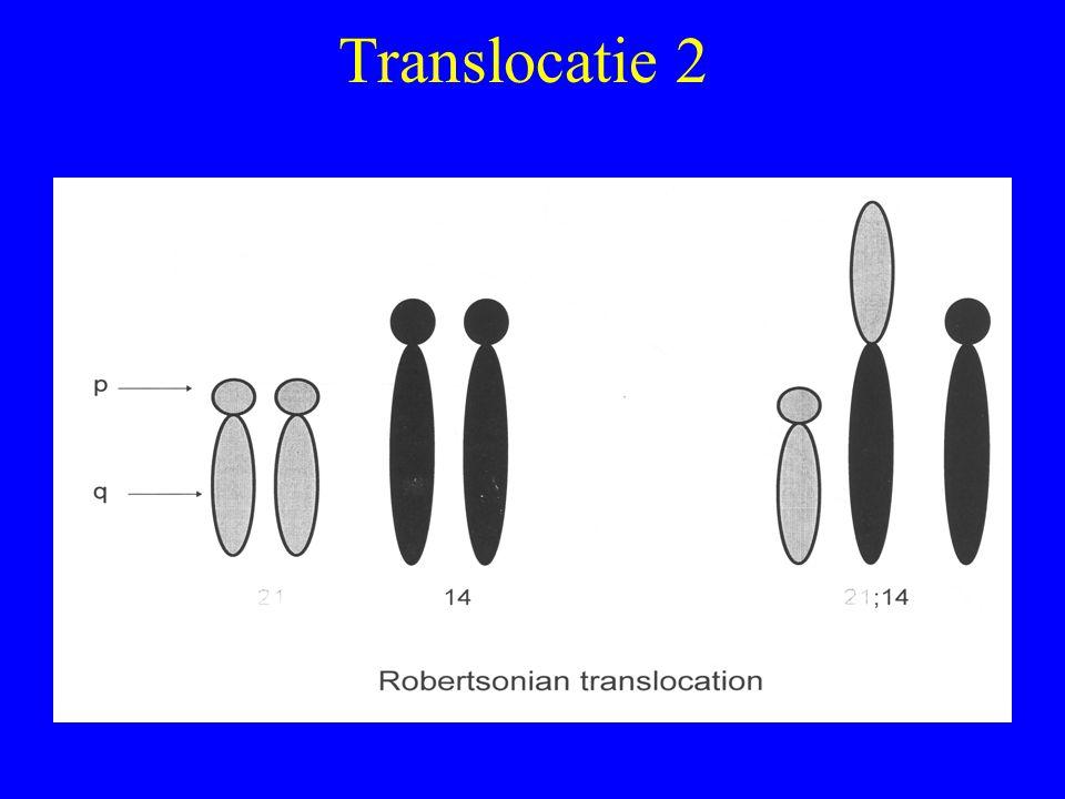 Translocatie 2