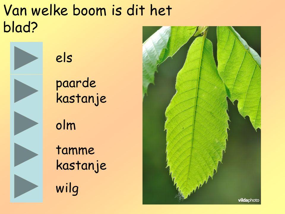 Van welke boom is dit het blad