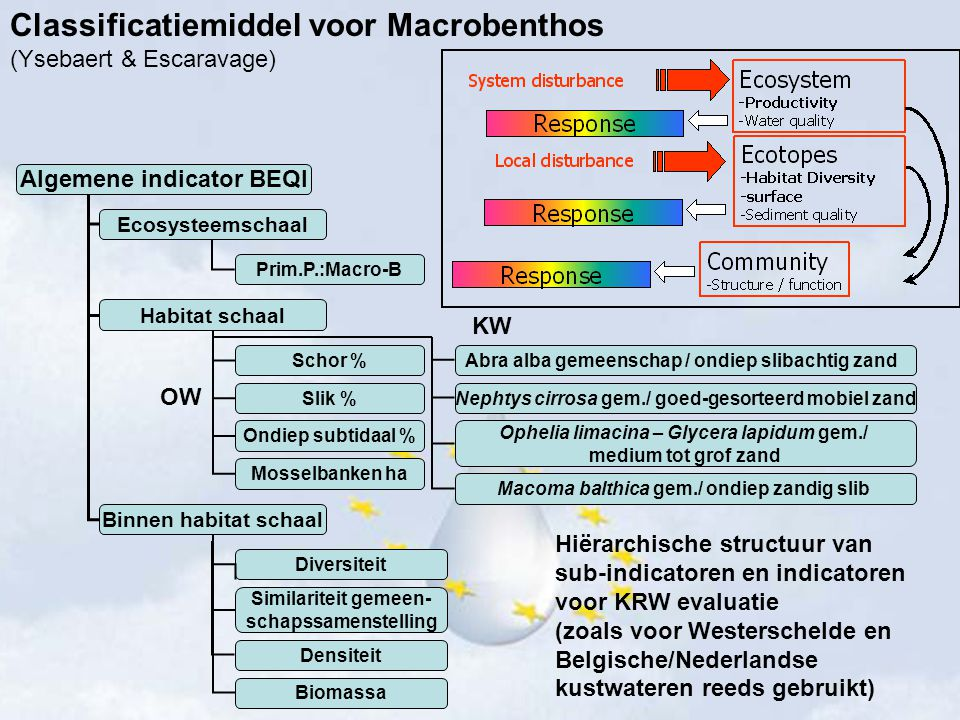 Classificatiemiddel voor Macrobenthos (Ysebaert & Escaravage)