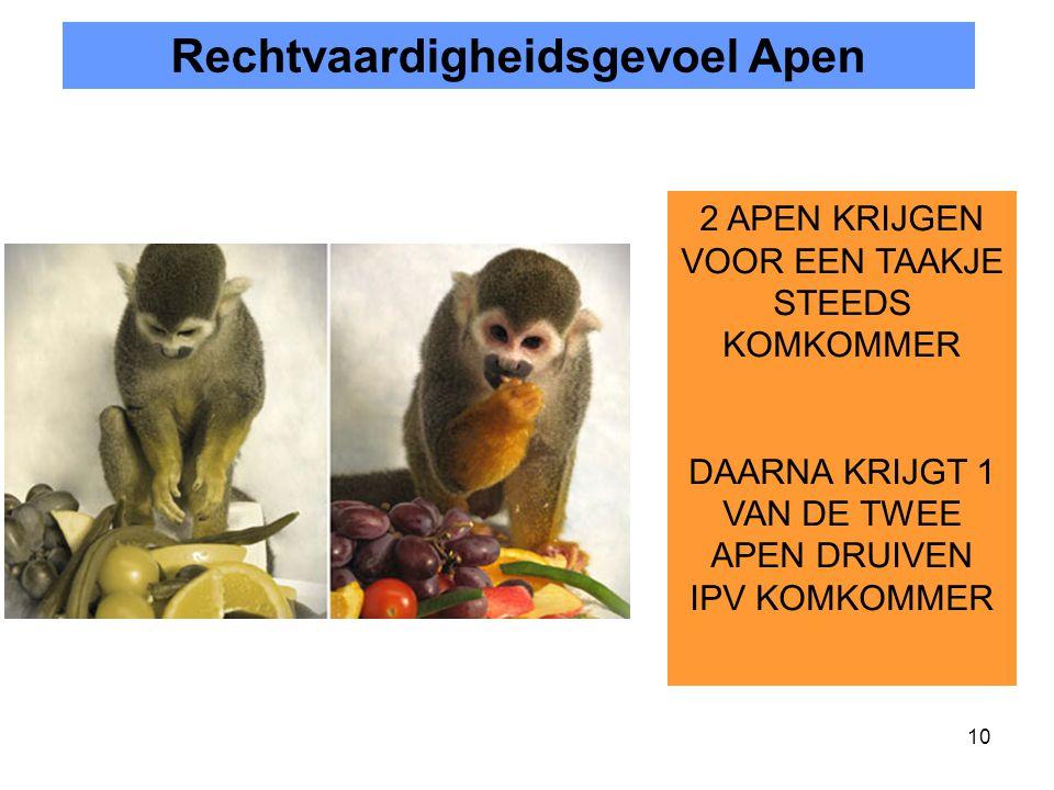 Rechtvaardigheidsgevoel Apen