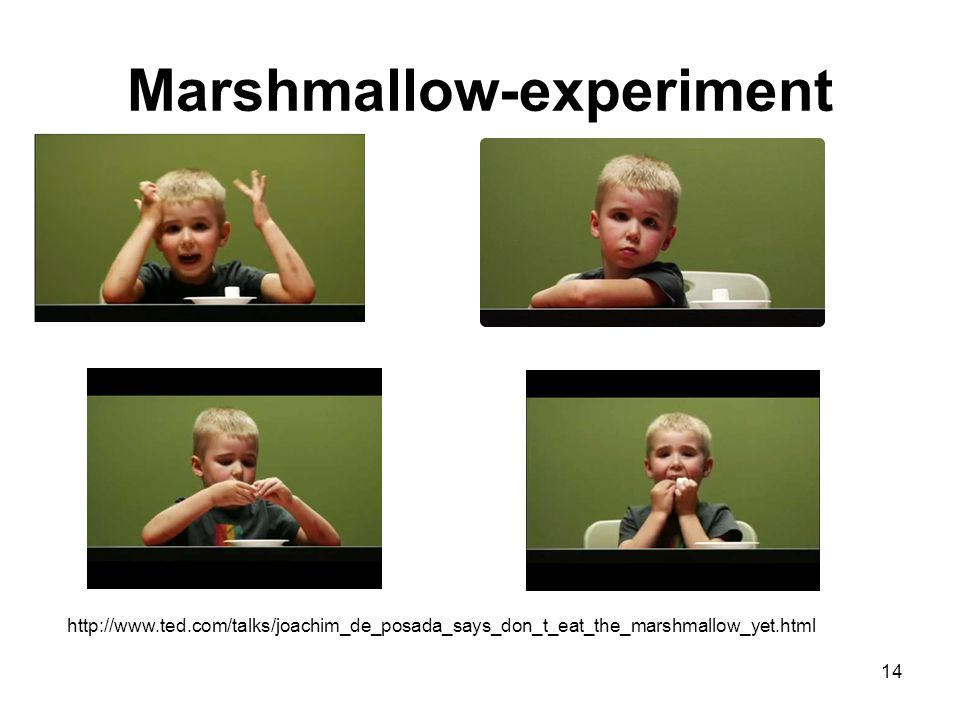 Marshmallow-experiment