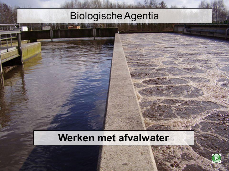 Biologische Agentia Werken met afvalwater