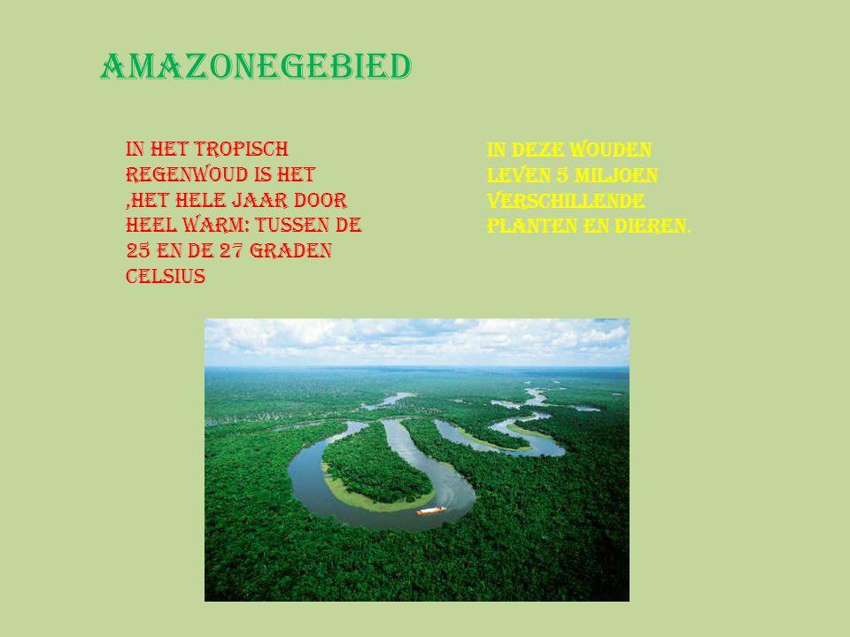 Amazonegebied In het tropisch regenwoud is het ,het hele jaar door heel warm: tussen de 25 en de 27 graden Celsius.