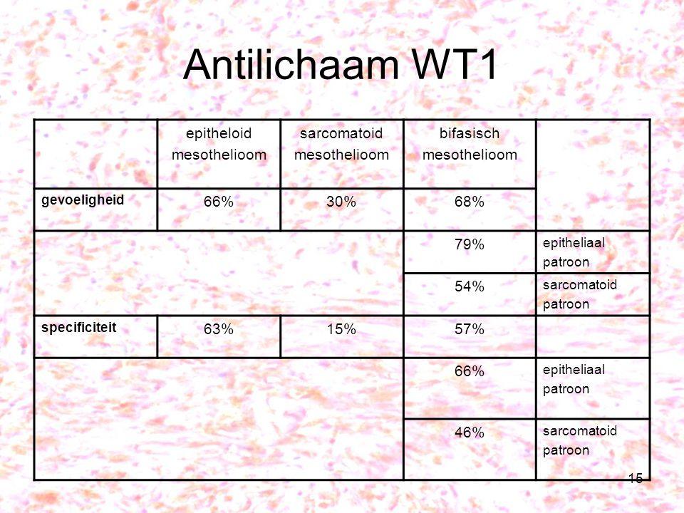 Antilichaam WT1 epitheloid mesothelioom sarcomatoid bifasisch 66% 30%