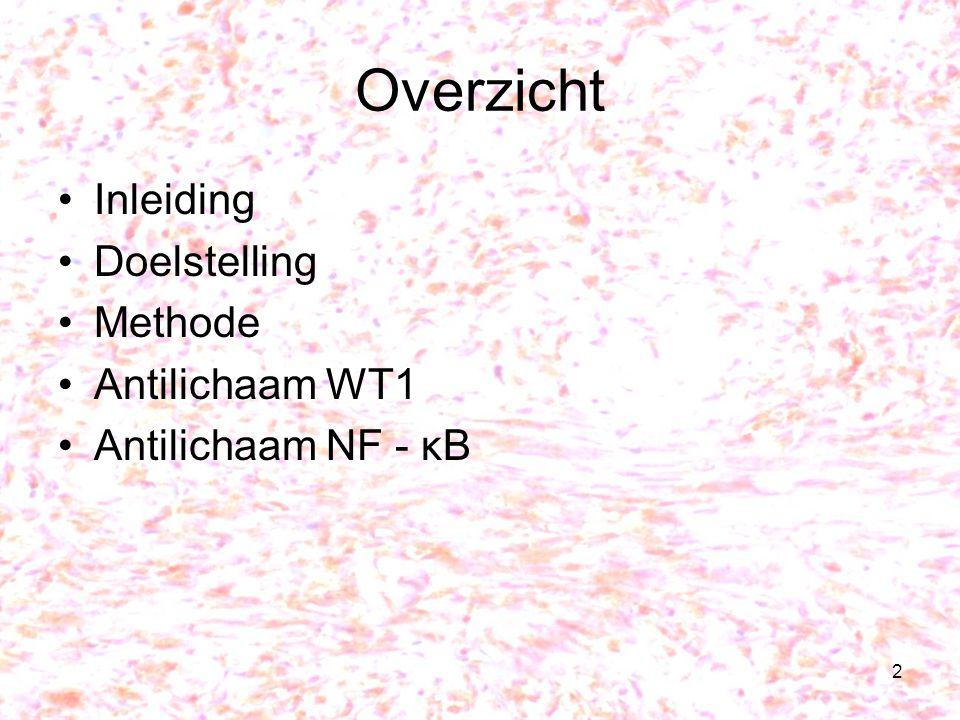 Overzicht Inleiding Doelstelling Methode Antilichaam WT1