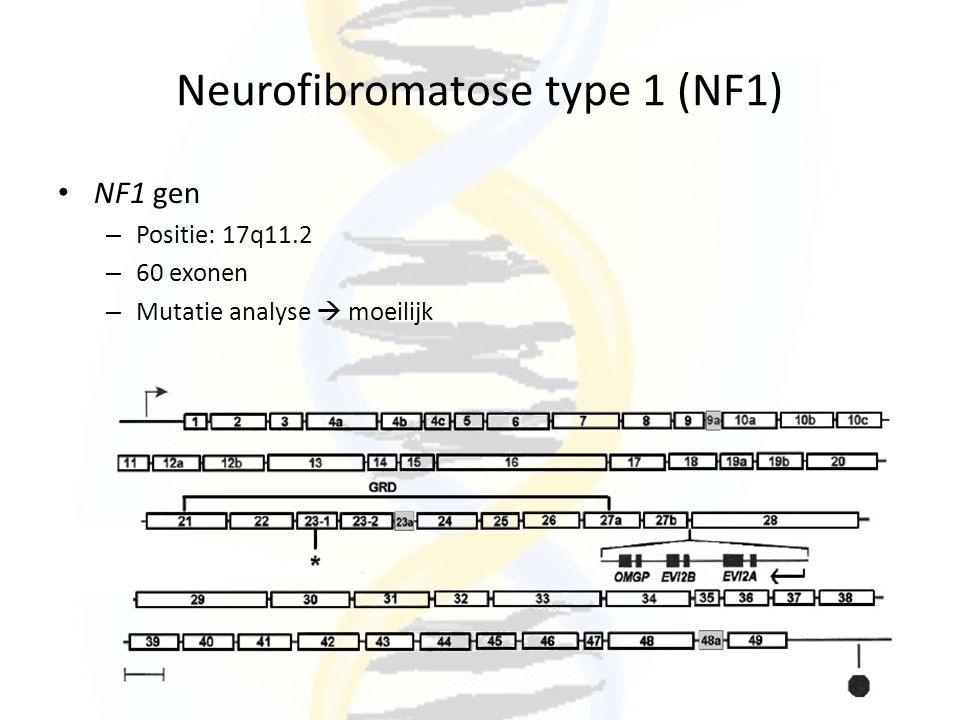 Neurofibromatose type 1 (NF1)