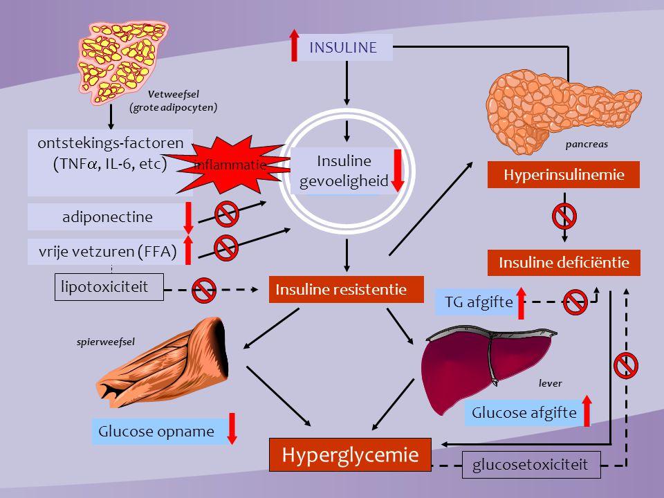 Vetweefsel (grote adipocyten)