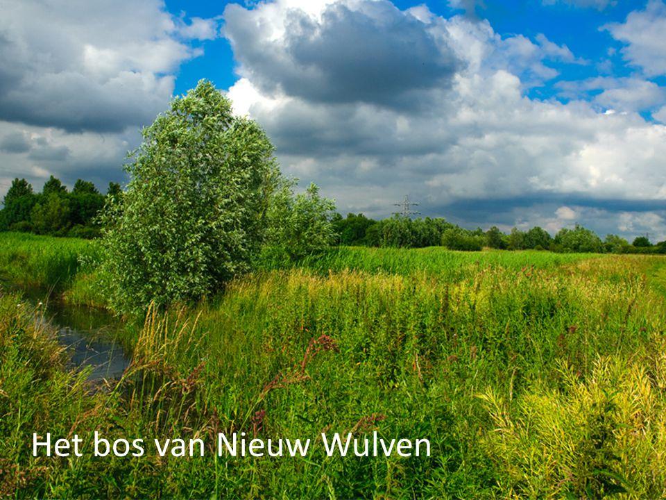 Het bos van Nieuw Wulven