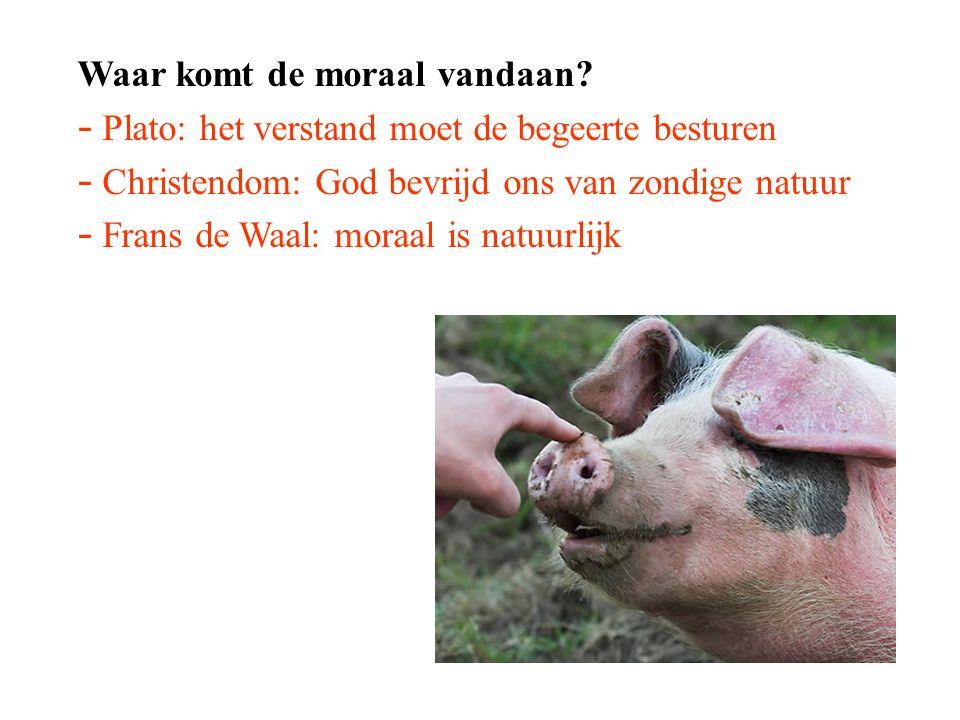 Waar komt de moraal vandaan