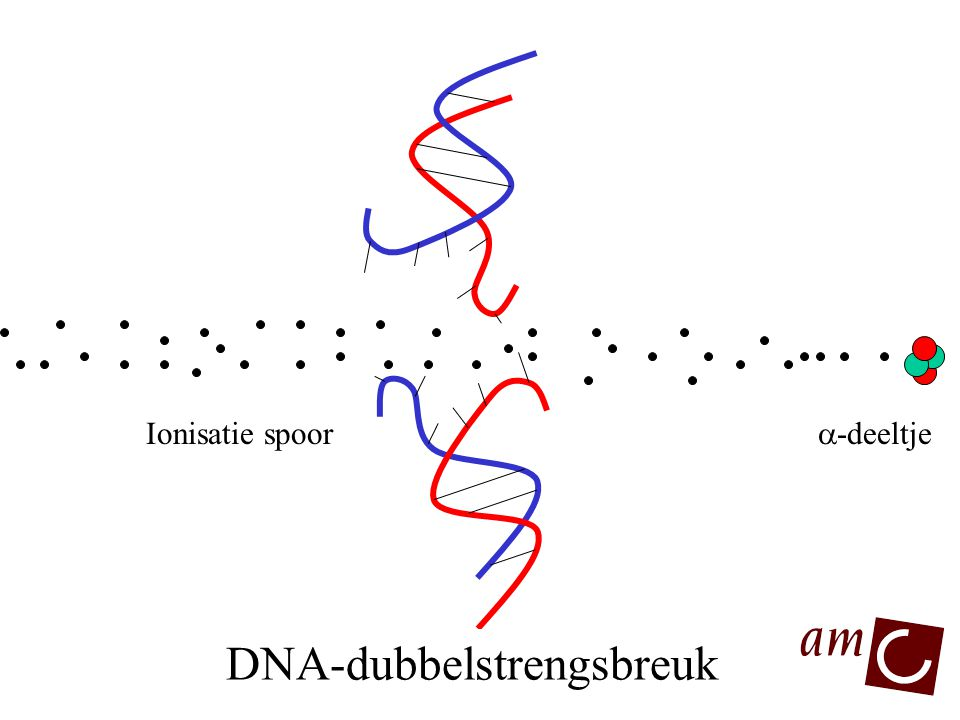DNA-dubbelstrengsbreuk DNA