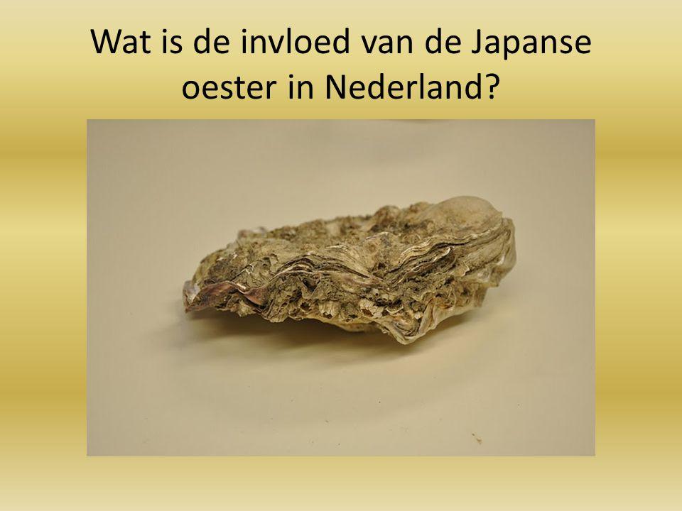 Wat is de invloed van de Japanse oester in Nederland