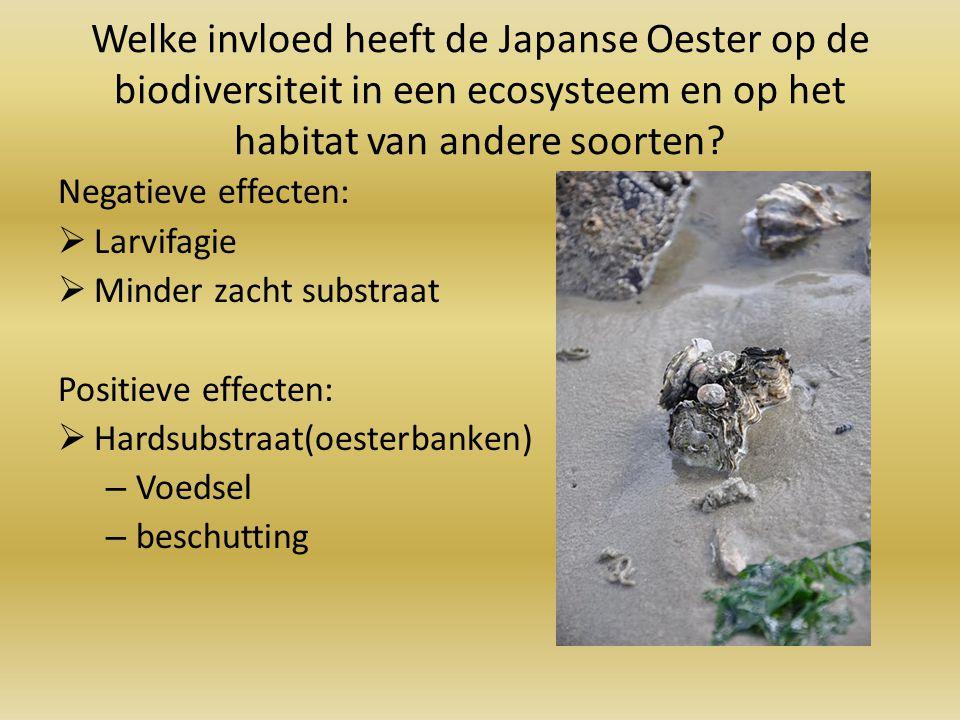 Welke invloed heeft de Japanse Oester op de biodiversiteit in een ecosysteem en op het habitat van andere soorten