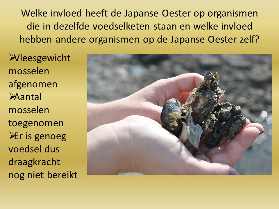 Welke invloed heeft de Japanse Oester op organismen die in dezelfde voedselketen staan en welke invloed hebben andere organismen op de Japanse Oester zelf
