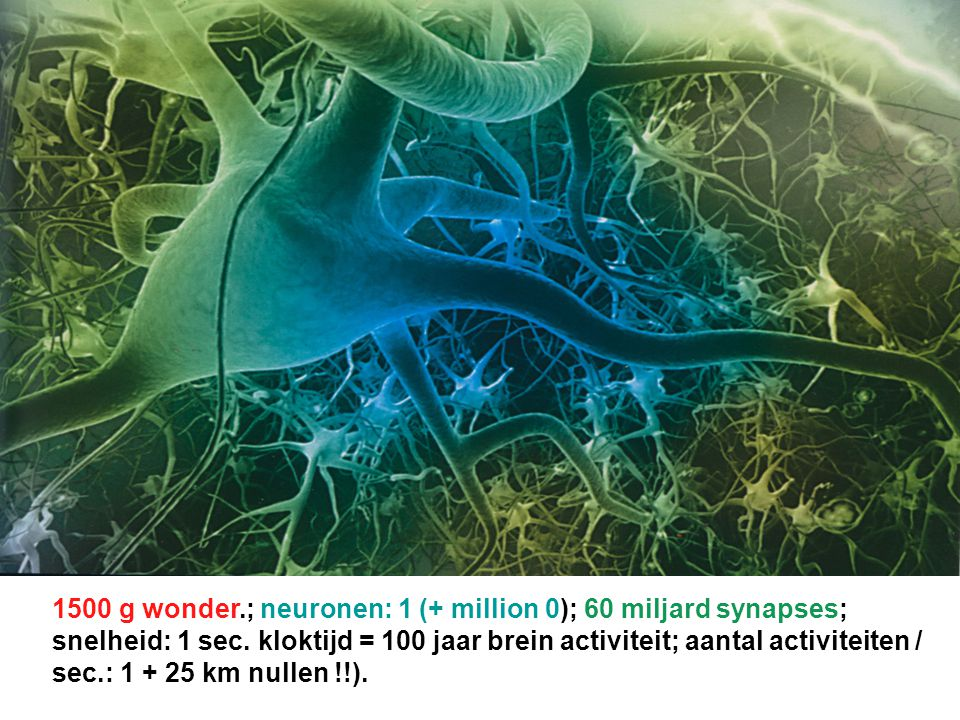 1500 g wonder.; neuronen: 1 (+ million 0); 60 miljard synapses; snelheid: 1 sec.