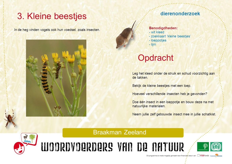3. Kleine beestjes Opdracht dierenonderzoek Braakman Zeeland