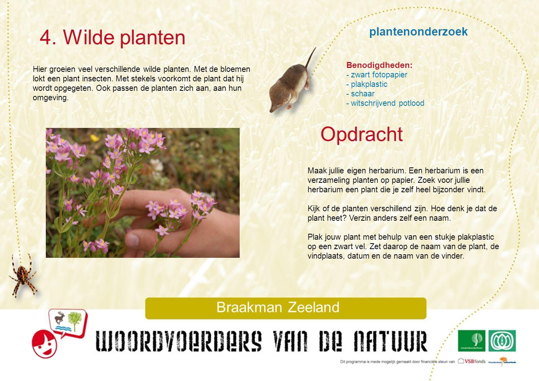 4. Wilde planten Opdracht plantenonderzoek Braakman Zeeland