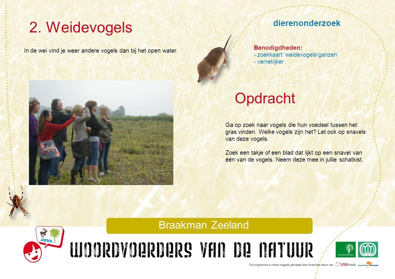 2. Weidevogels Opdracht dierenonderzoek Braakman Zeeland