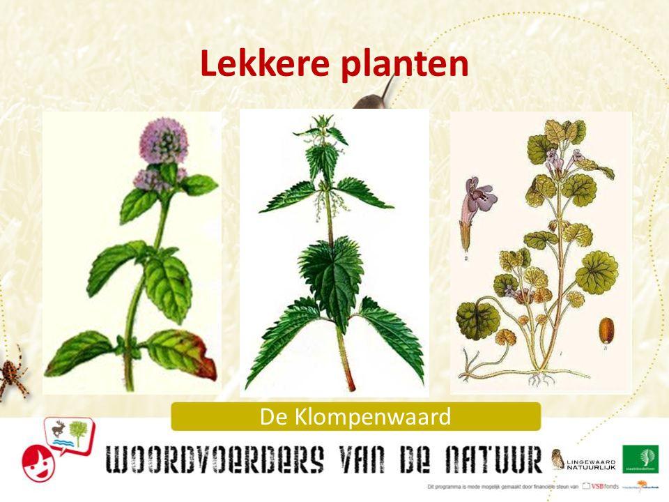 Lekkere planten Gelukkig zijn er behalve giftige planten en moordenaars ook lekkere planten!