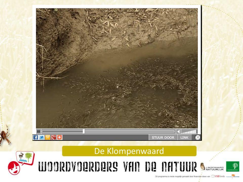 Vissen in de Nevengeul http://www.dwaalfilm.eu/#94.