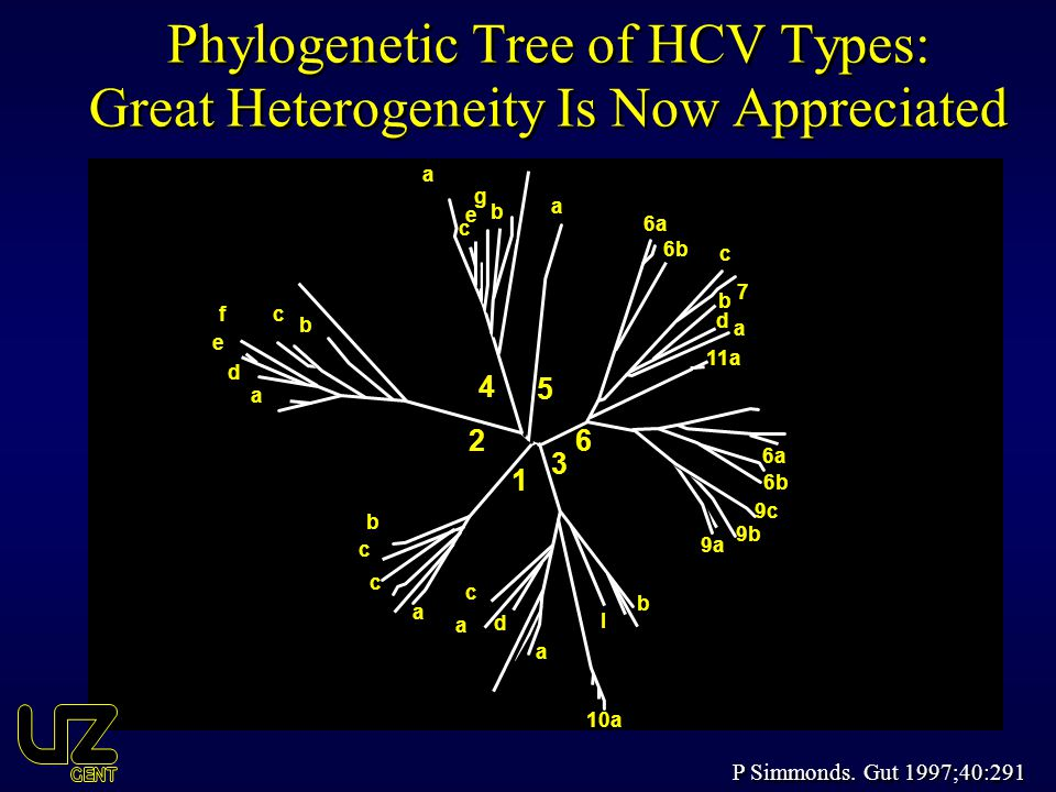 Phylogenetic Tree of HCV Types: Great Heterogeneity Is Now Appreciated