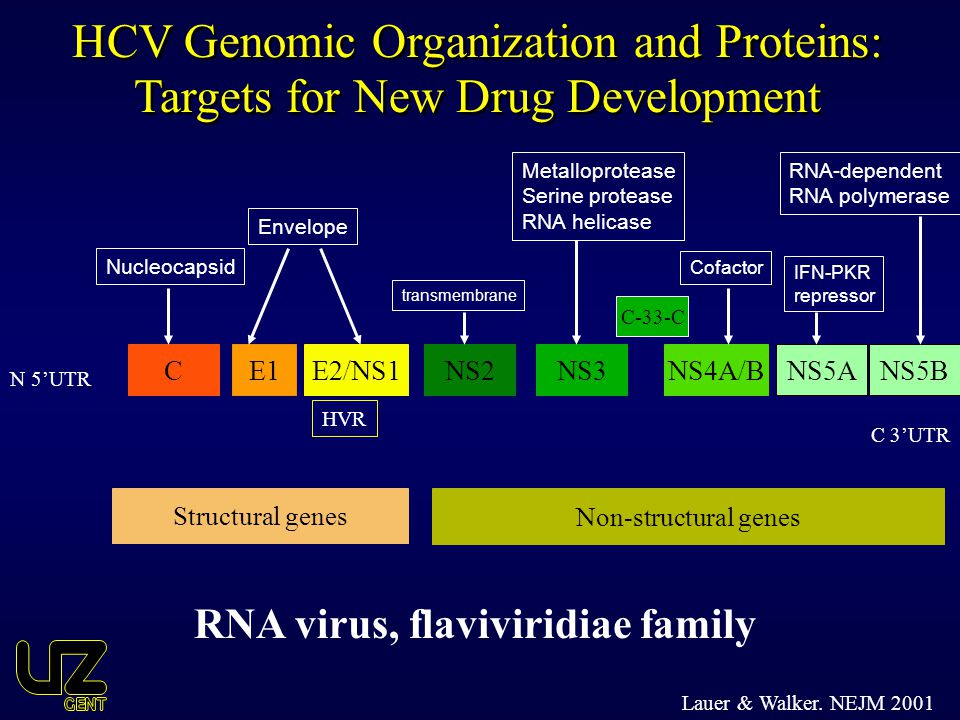 HCV Genomic Organization and Proteins: Targets for New Drug Development
