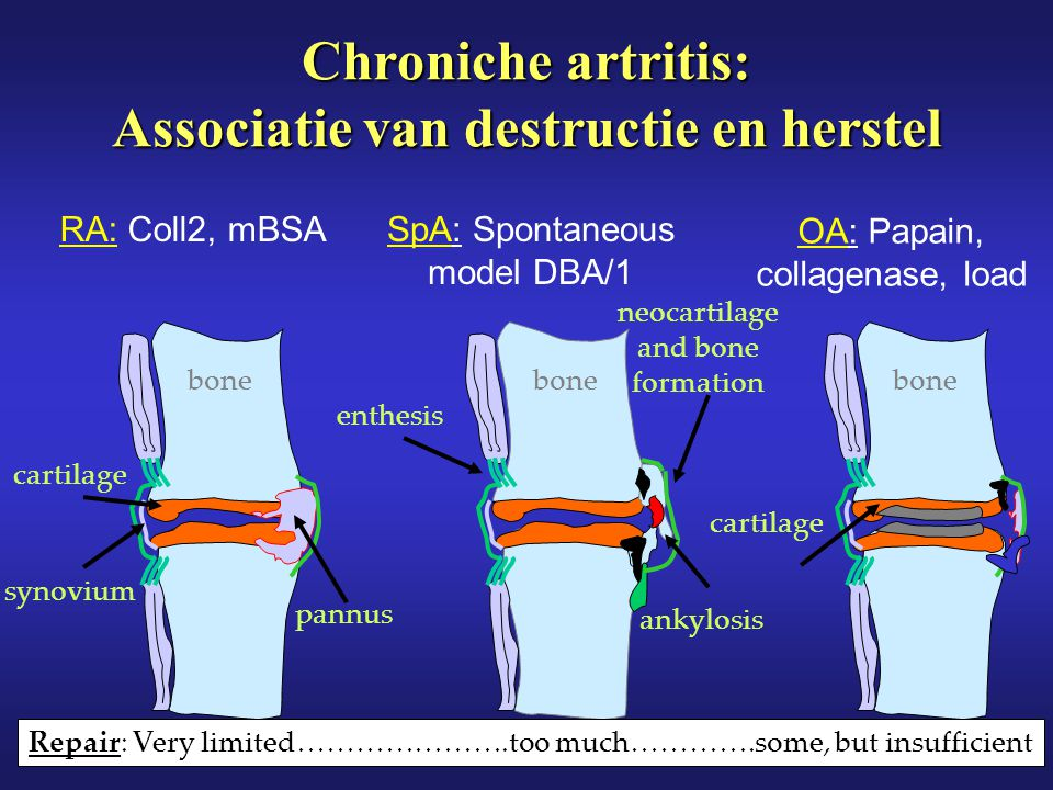 Chroniche artritis: Associatie van destructie en herstel