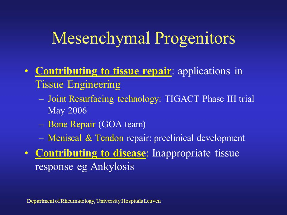 Mesenchymal Progenitors
