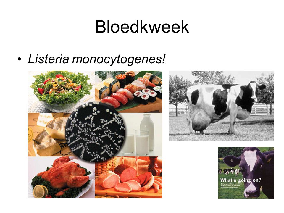 Bloedkweek Listeria monocytogenes!