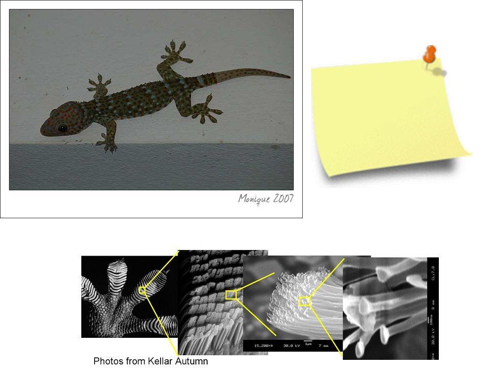 21 oktober 2008 Gecko VanderWaalskrachten Idee voor post-it