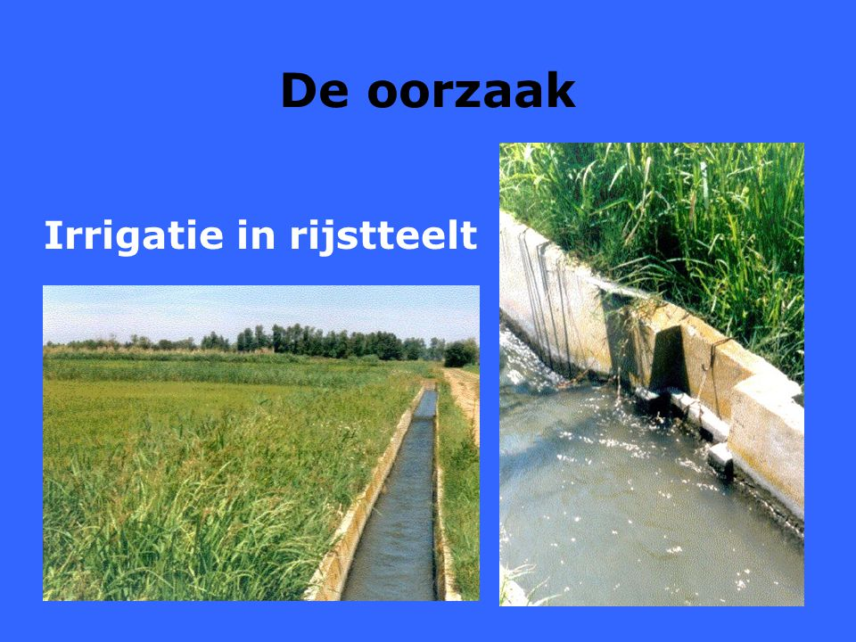 Irrigatie in rijstteelt