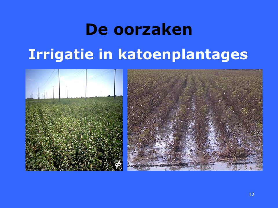 Irrigatie in katoenplantages