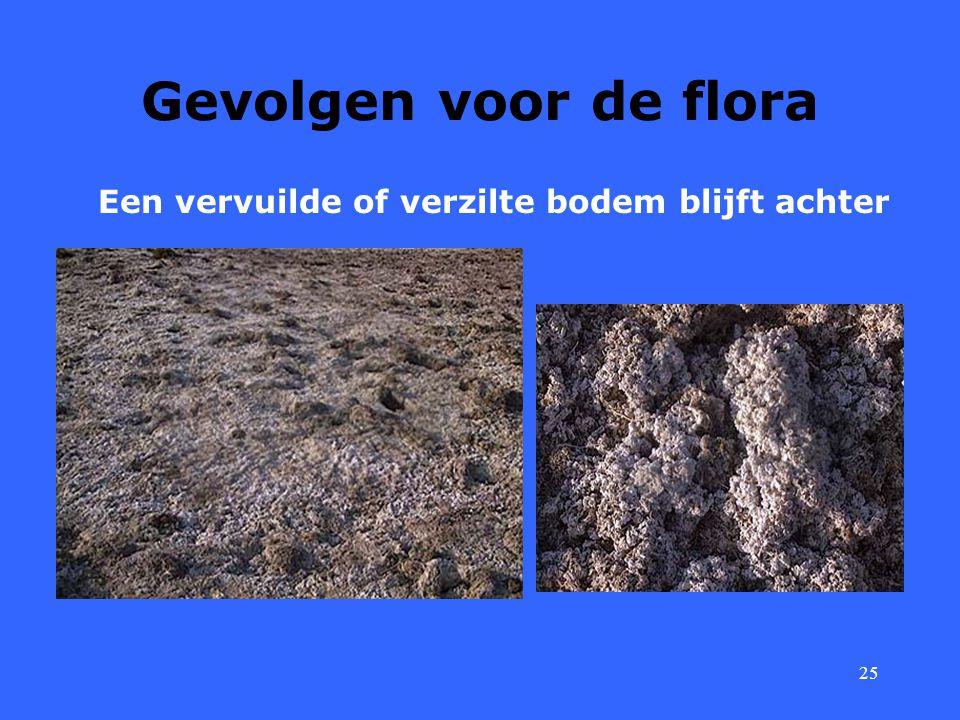 Gevolgen voor de flora Een vervuilde of verzilte bodem blijft achter