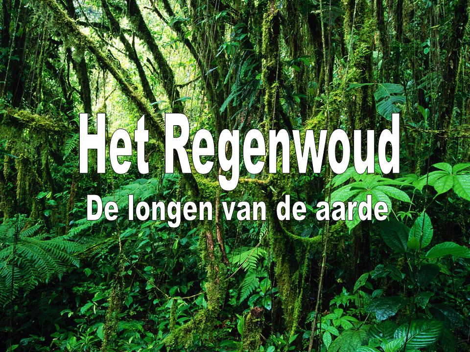 Het Regenwoud De longen van de aarde