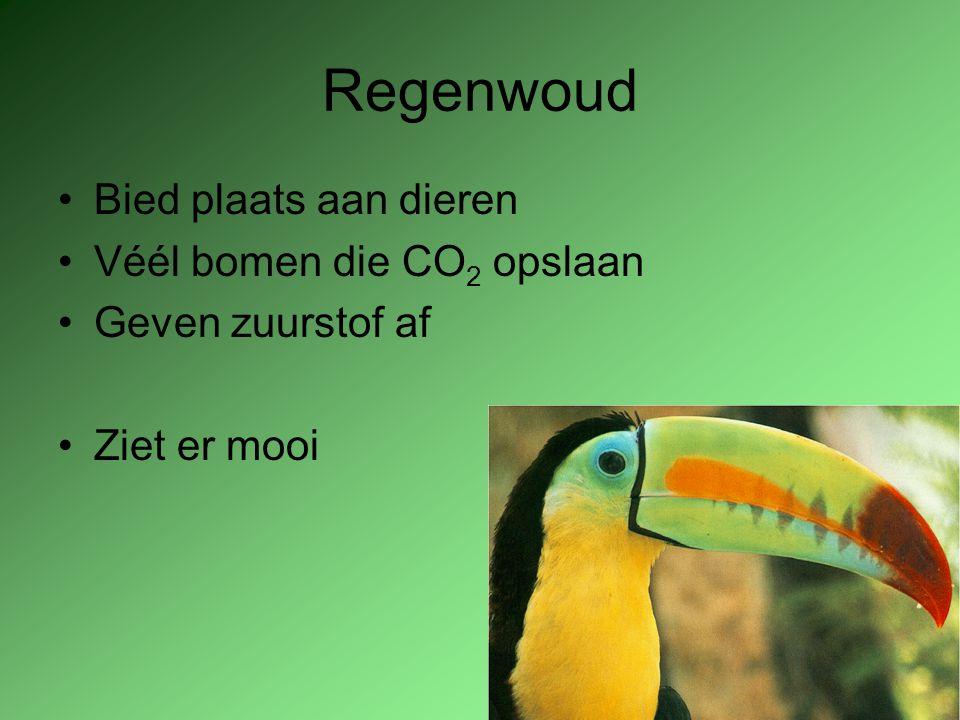 Regenwoud Bied plaats aan dieren Véél bomen die CO2 opslaan